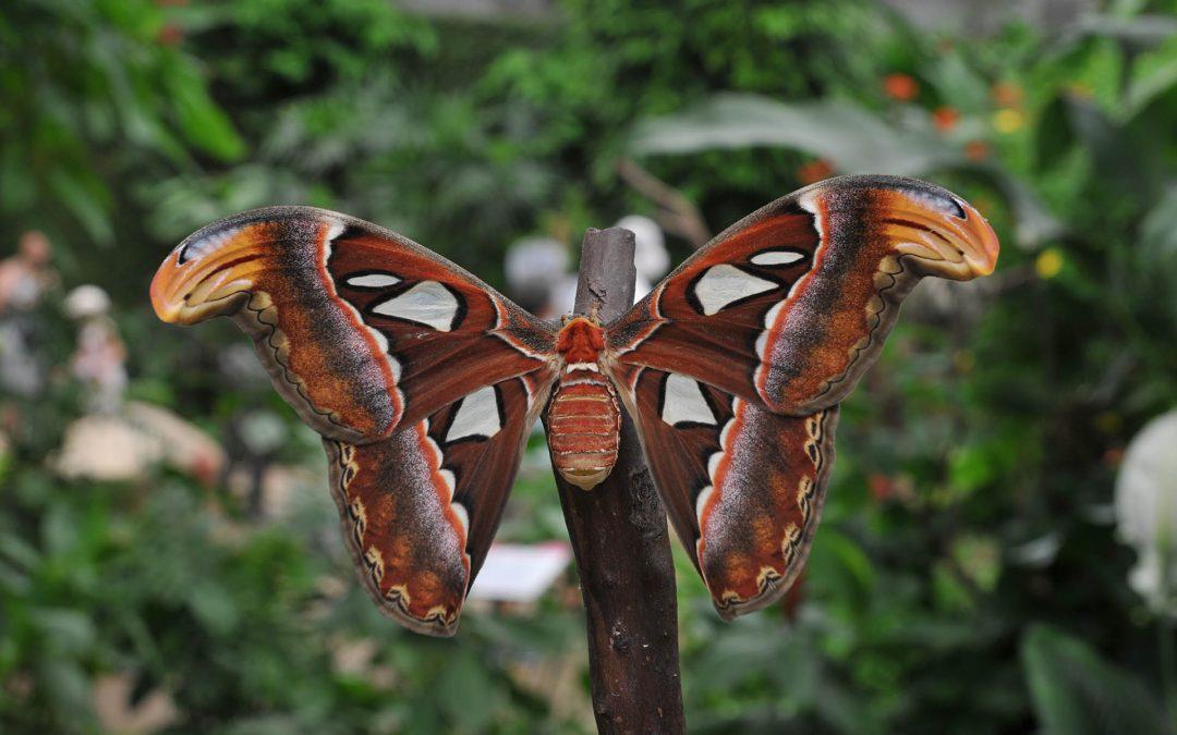 Visit a Butterfly Park
